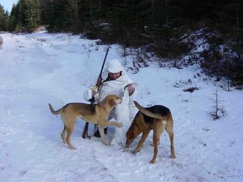 Охота с собаками, на русака и беляка