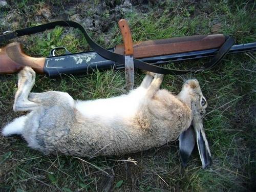 Загонная охота, на зайца, зимой и осенью, без собак