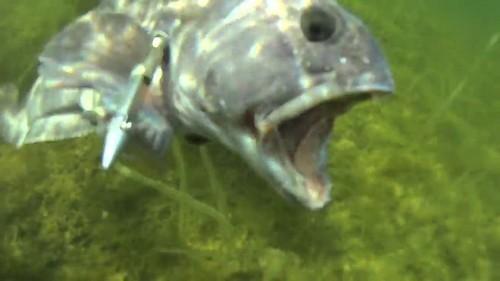 Подводная охота, в Белом море