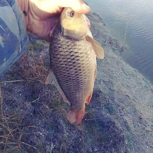 Классная рыбалка и ловля крупного карася