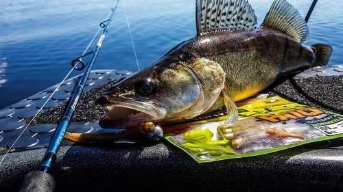зимняя рыбалка на судака