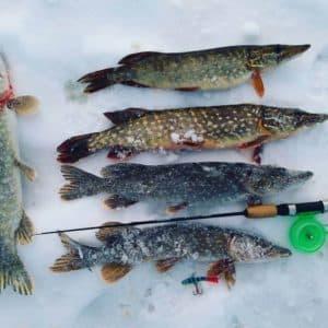 Особенности ловли щуки в феврале