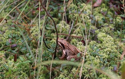 Ловля щуки на лягушку