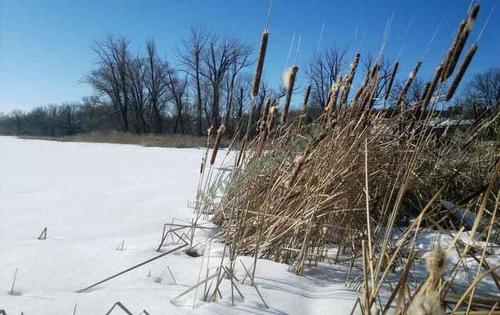 Особенности добычи зимнего окуня