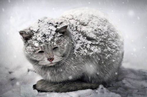 Помочь бездомным животным