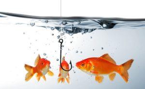 Где и почему ловится рыба
