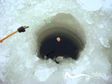 Поплавок для ловли карпа зимой