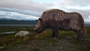 Шерстистый носорог-среда обитания