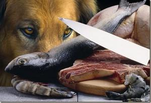 Какую еду нельзя есть щенку