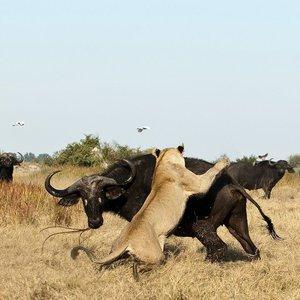 Какие дикие животные обитают в Африке