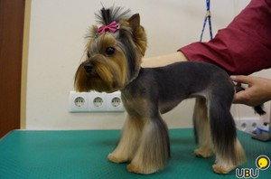 Особенности стрижки собак