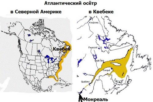 Распространение атлантического осетра