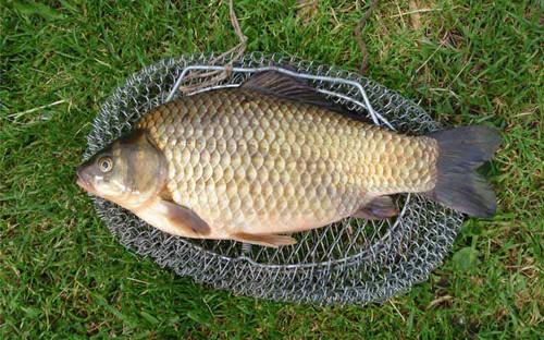 Рыбалка на карася на пенопласт на течении