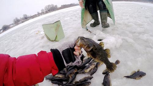 Ловля ротана зимой по первому льду