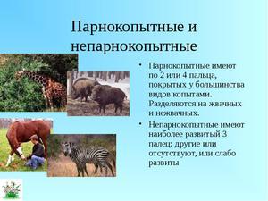 Парнокопытные животные