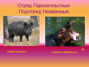Класс парнокопытных животных