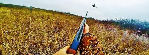 Охота на фазана