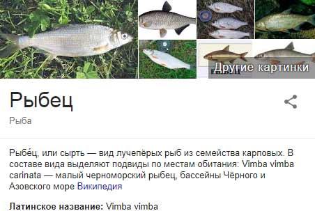 Рыба рыбец и его описание