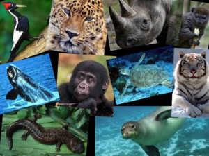 В красной книге много представителей и она регулярно пополняется новыми видами
