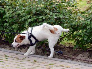 Приучение собаки