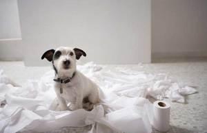 Собака и туалетная бумага