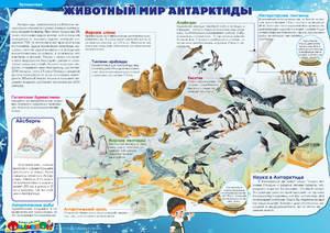 Какие животные в Антарктиде