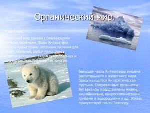 Какие животные обитают в Антарктиде