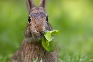 Что едят зайцы