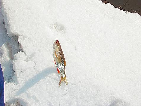 Этой зимой рыболовы обречены на успех