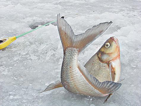 Характер поведения рыбы при смене сезонов