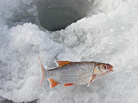 Зимний сезон часто досаждает рыболовам нестабильным клевом
