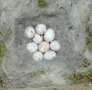 Начало периода гнездовья