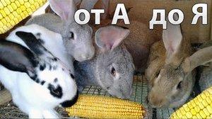 Как нужно кормить кроликов