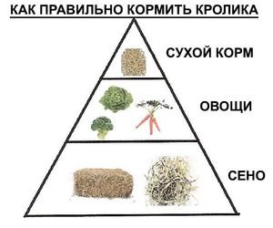Чем можно кормить кроликов