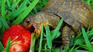 Пища черепахи
