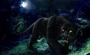 Так кто же такая пантера - леопард или ягуар?