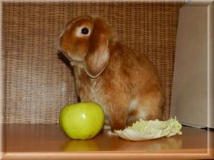Кормление кролика - подбираем рацион