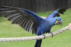 Экзотические птицы: виды