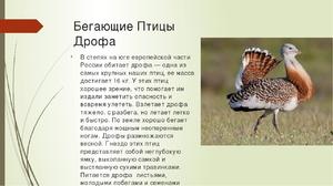 Как выглядит птица дрофа