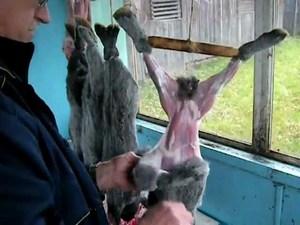 Снятие шкуры с тушки кролика
