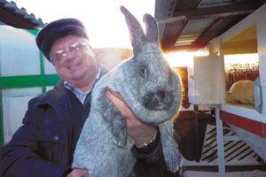 Рекомендации специалистов для постройки кроличьей клетки