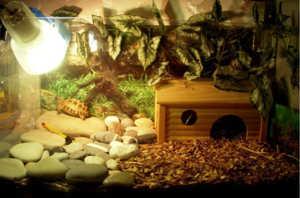 Для черепахи необходим особый микроклимат и домик для укрытия