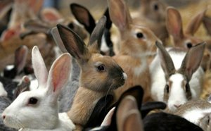 Секреты разведения кроликов