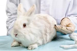Как уберечь кроликов от опасных заболеваний
