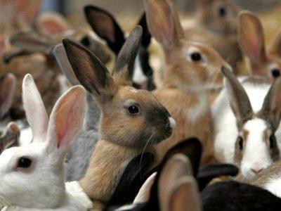 Как ухаживать за кроликами: описание и особенности ухода