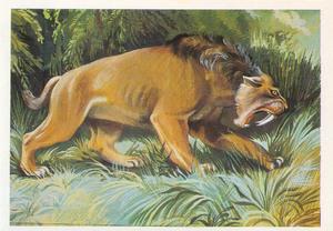 Какие повадки были у тигра
