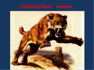 Описание саблезубого тигра