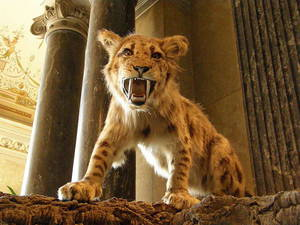 Современные потомки тигра