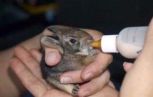 Порции при кормлении крольчат
