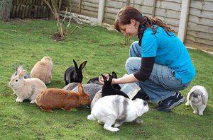 Рекомендации опытных кролиководов для кормления и выращивания крольчат